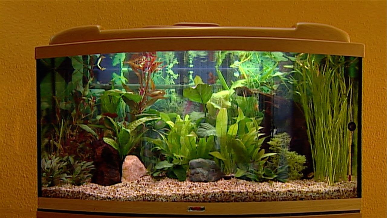 Kleine Fische 1 Ein Aquarium Selbst Einrichten Videoworkshops