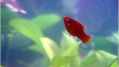 Kleine Fische (5) – Fischkrankheiten – Vorbeugung Und Behandlung