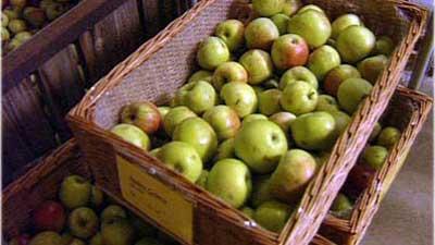 Obst Ernten Und Einlagern