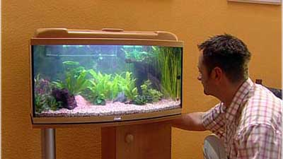 kleine fische 1 ein aquarium selbst einrichten videoworkshops f r selbermacher. Black Bedroom Furniture Sets. Home Design Ideas
