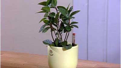 Wie Zimmerpflanzen Vor Erkältungen Schützen
