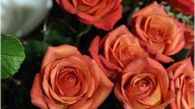 Blumen und Sträucher