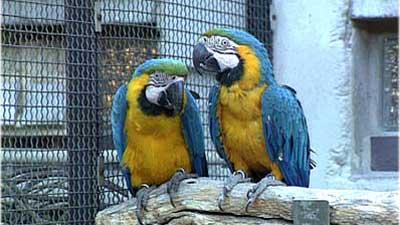 Exotische Vögel – Papageien