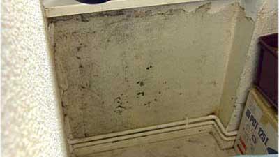 keine desinfektionsmittel gegen schimmel verwenden videoworkshops f r selbermacher. Black Bedroom Furniture Sets. Home Design Ideas